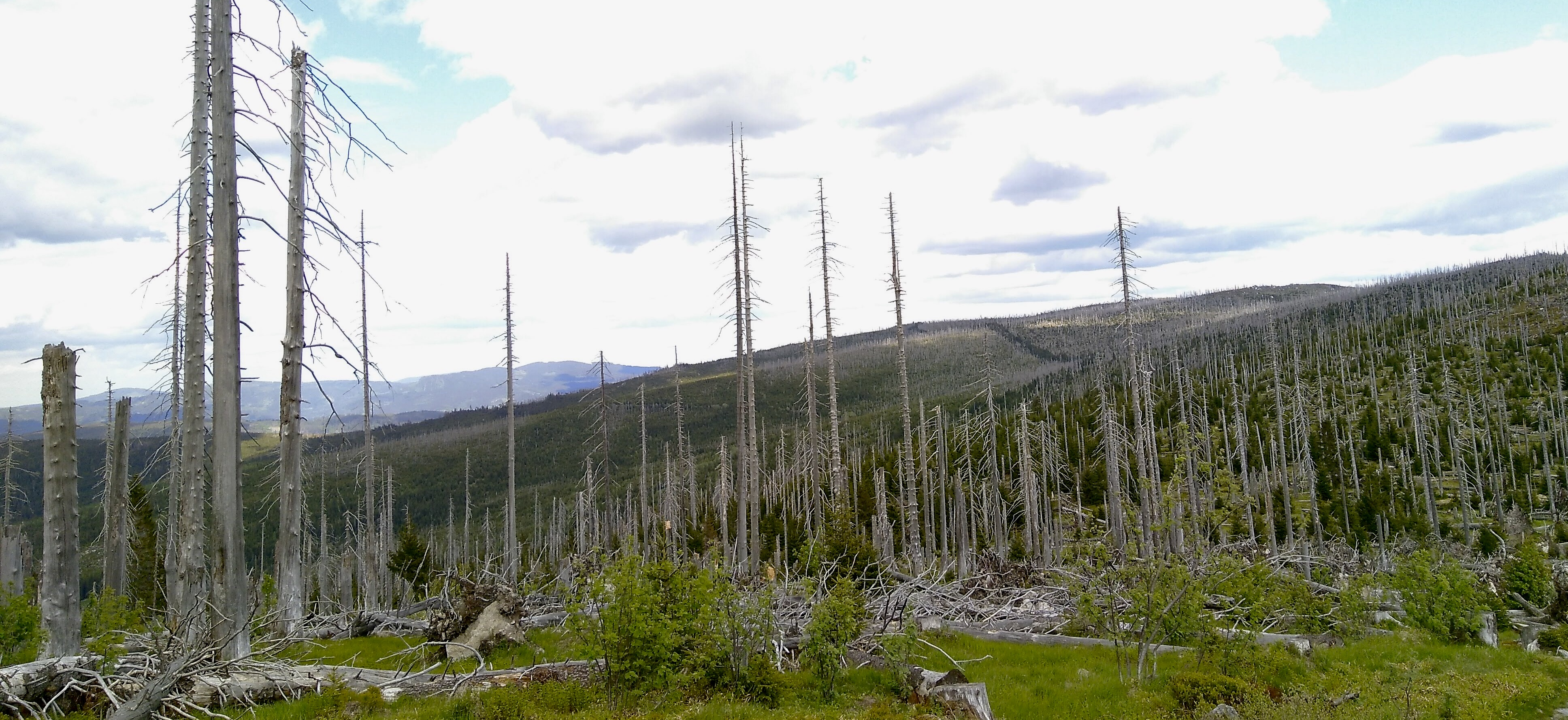 Der Wald stirbt nicht, nur einzelne Bäume.