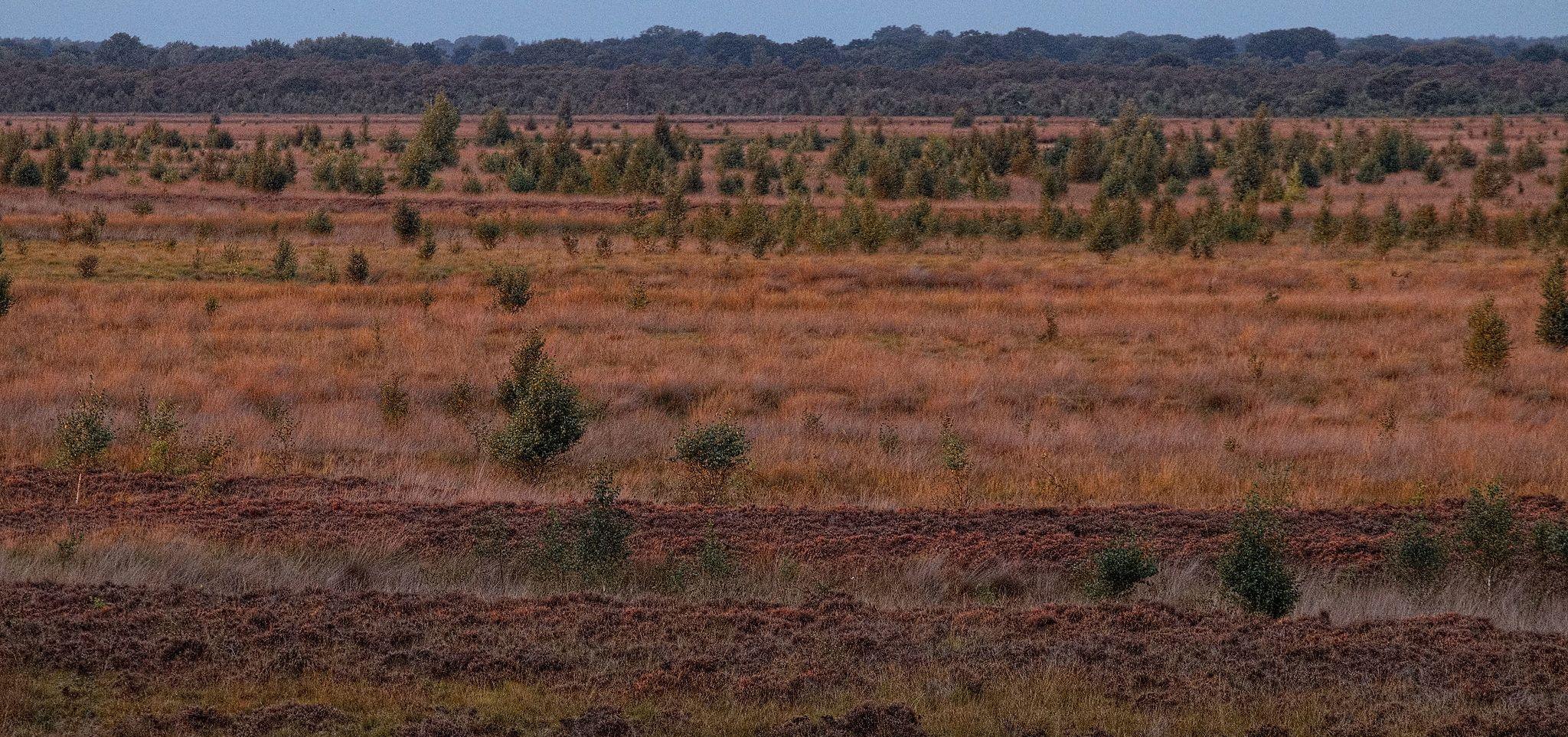 Die Niederungs-Landschaft bis zum Horizont