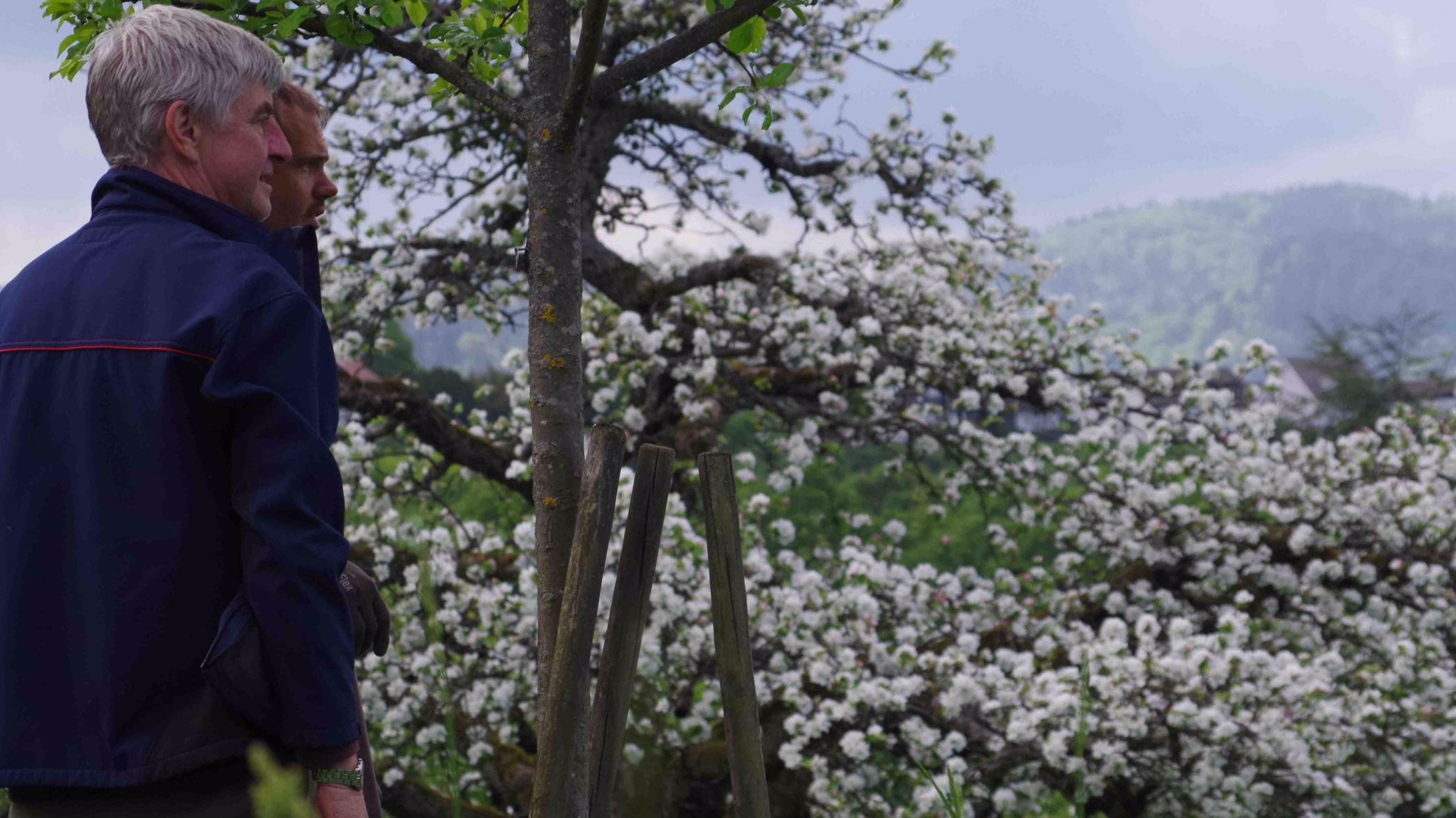 Blick aufs Blütenmeer bei Baden-Baden