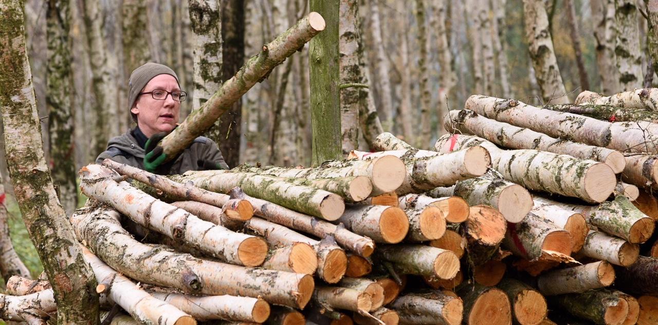 Birkenholzaufschichtungen nach Birkenfällungen