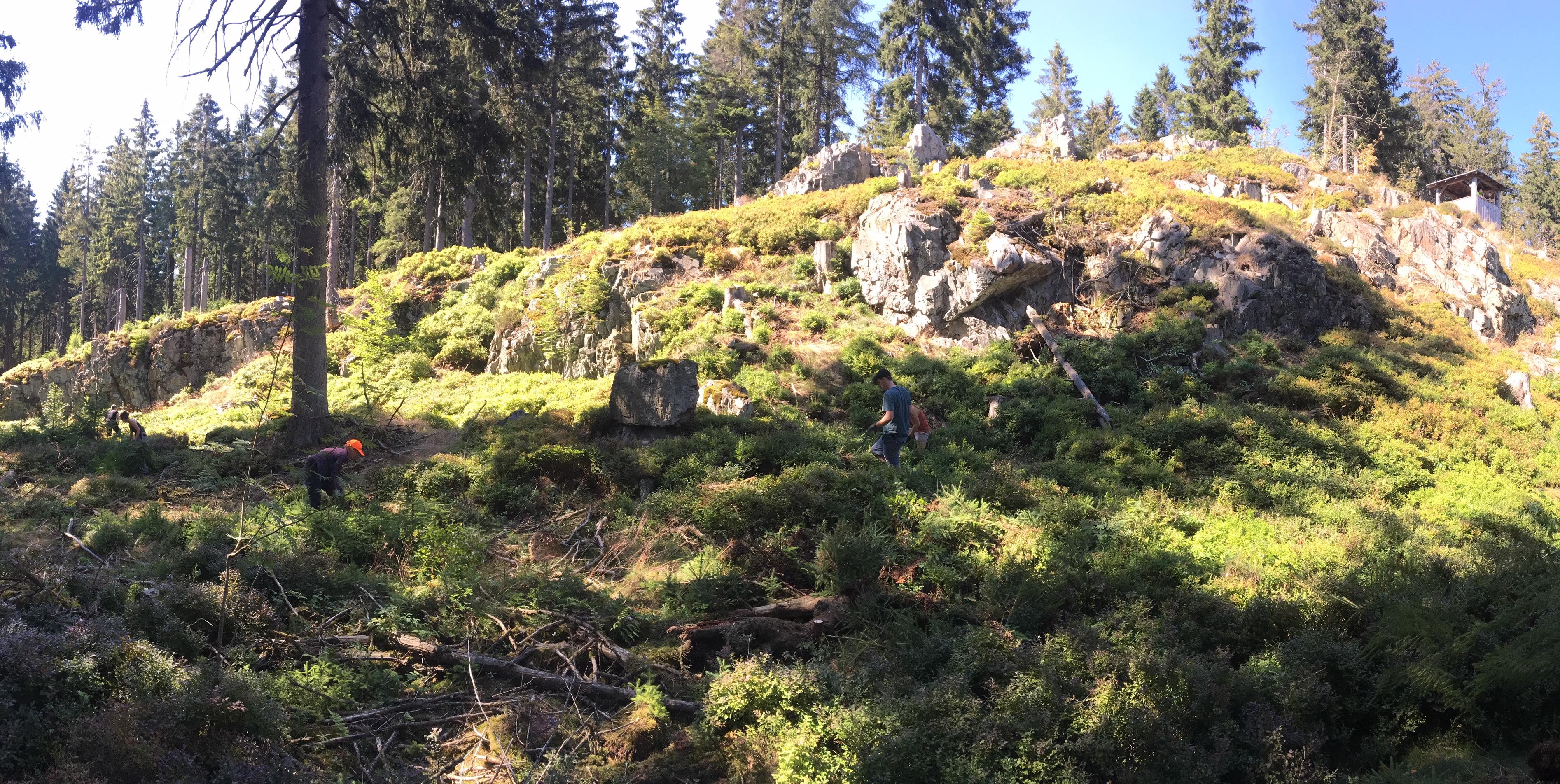 Felsen freistellen für Kreuzotter und Co.