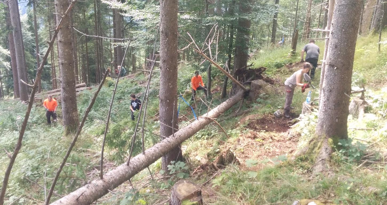 Wegebau im Schutzwald