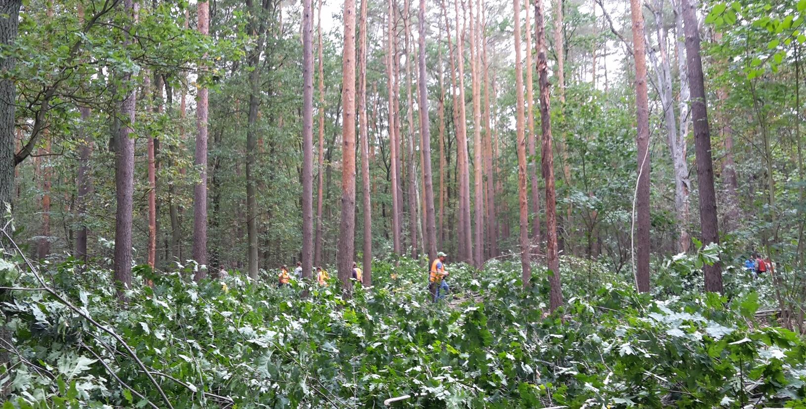 Böse Baumarten weichen für standortsheimische Arten