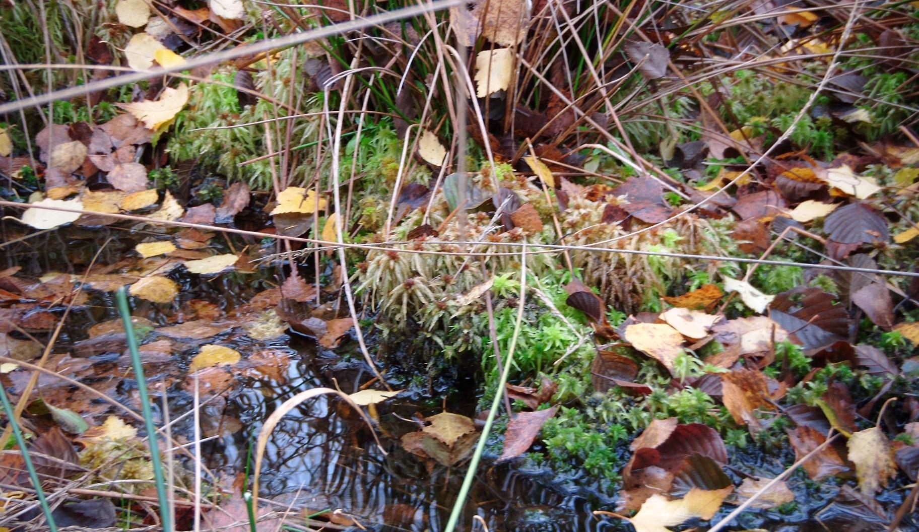 Stehendes Wasser ist Erfolgszeichen der Moorvernässung