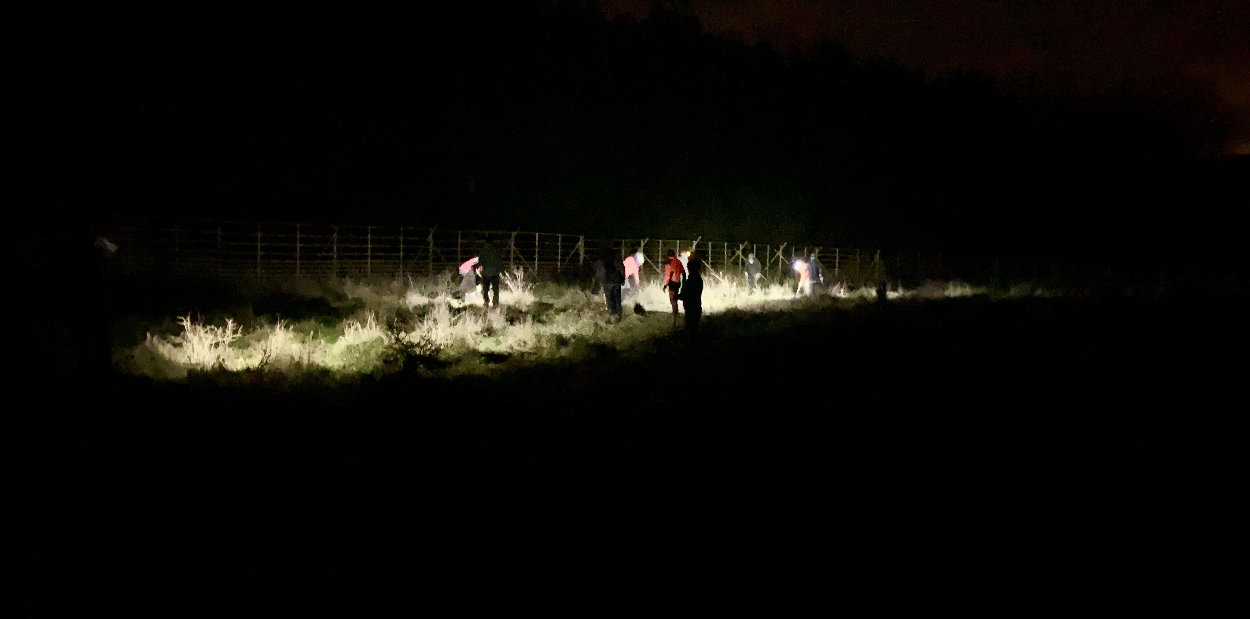 Laubbäumchen im Nachtlicht