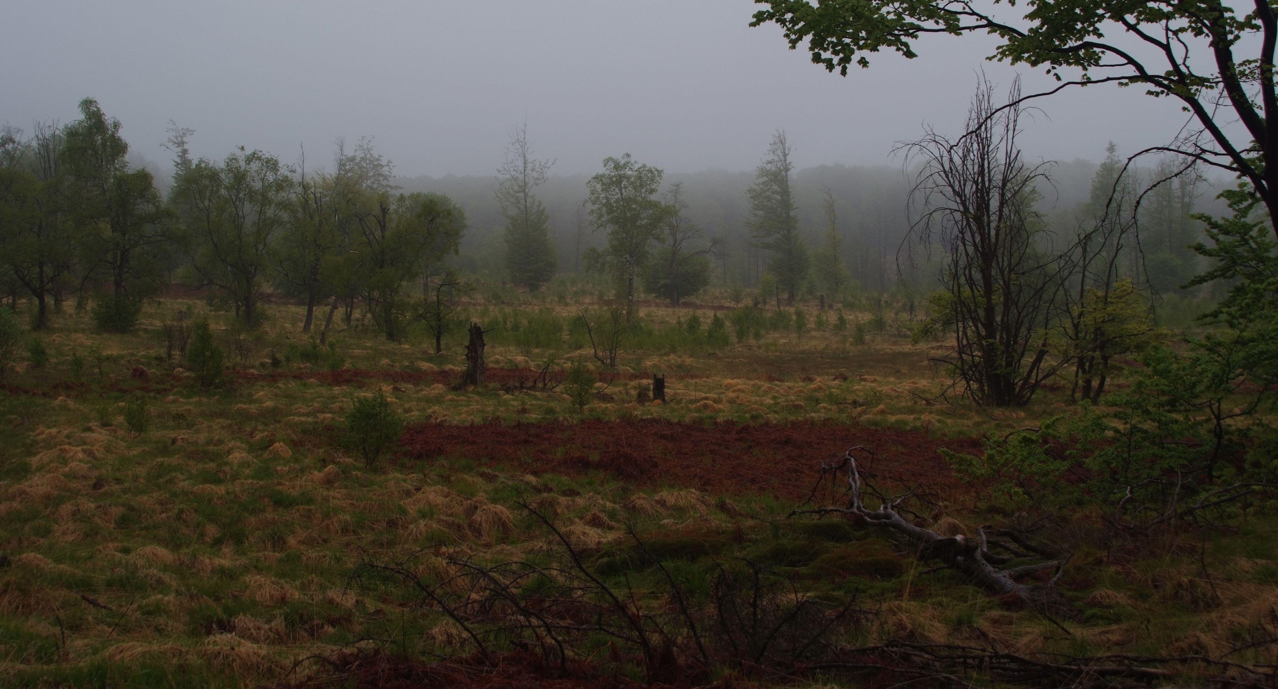 Moorwiedervernässung mit Niederschlag