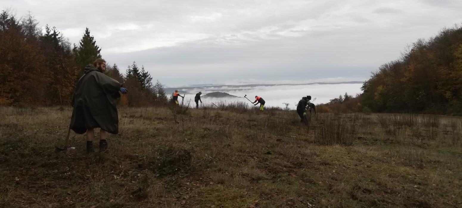 Brombeeren bekämpfen über dem Nebelmeer