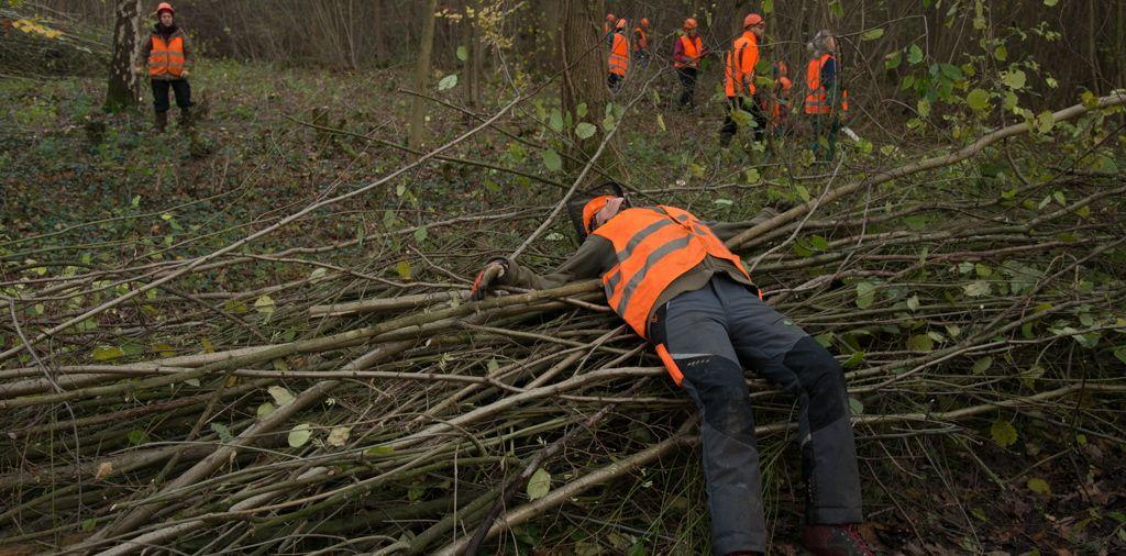 Mittelwaldbewirtschaftung im Münsterland