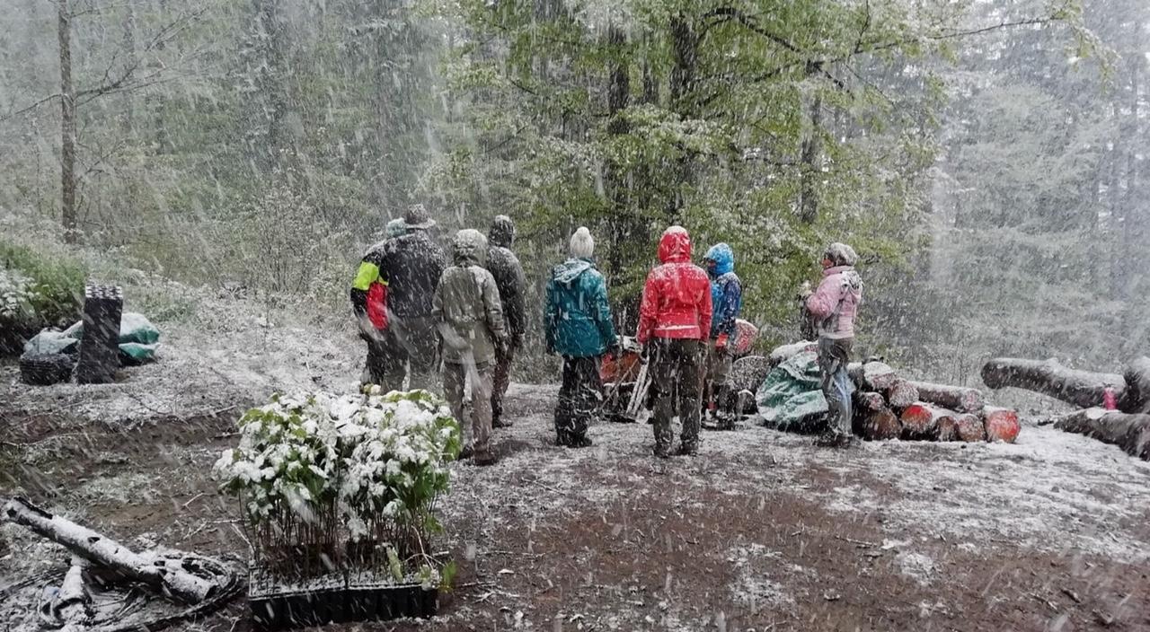Schneegestöber zur Pflanzzeit