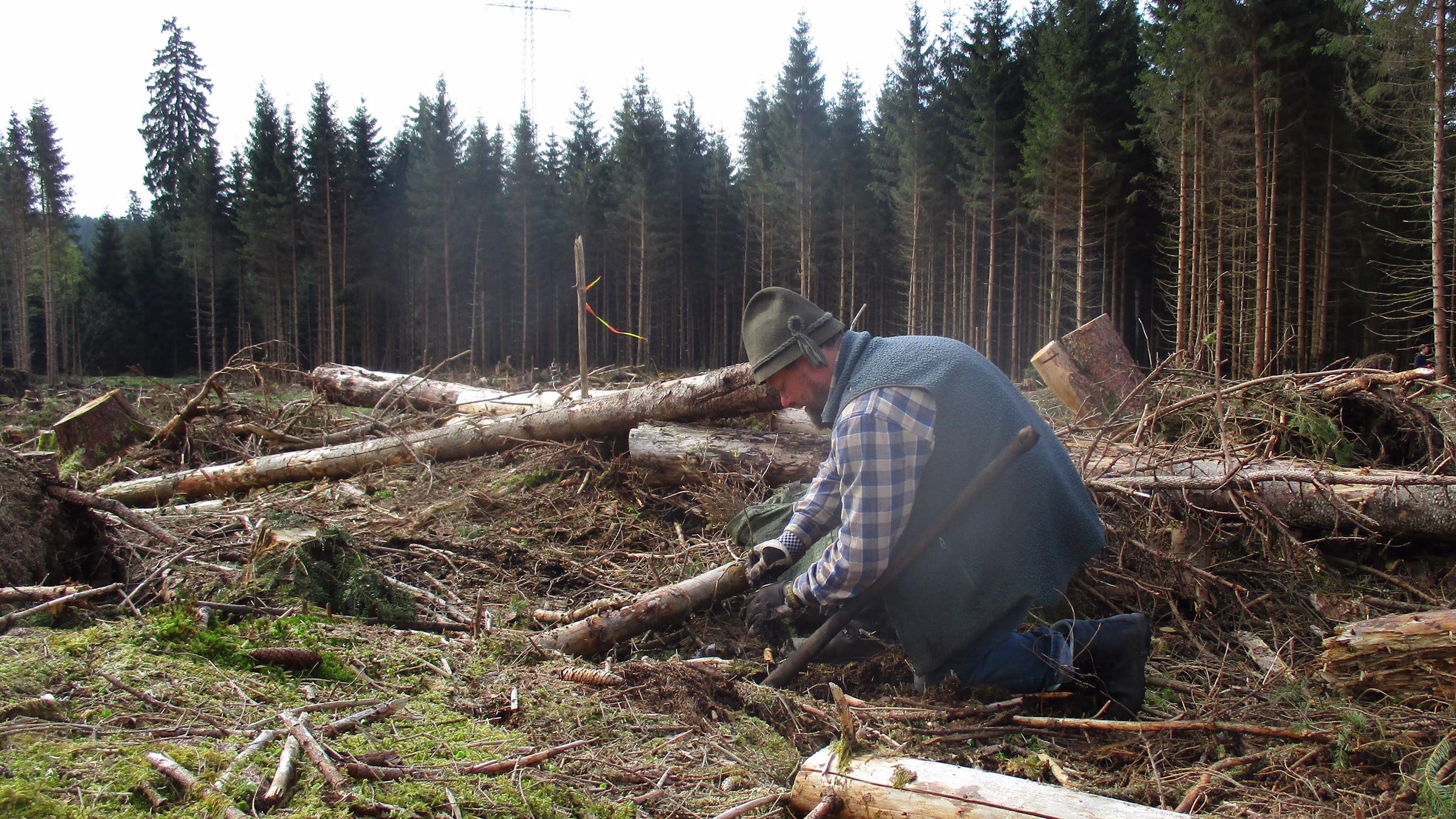 Frederike sei Dank: Neue Pflanzflächen im Harz