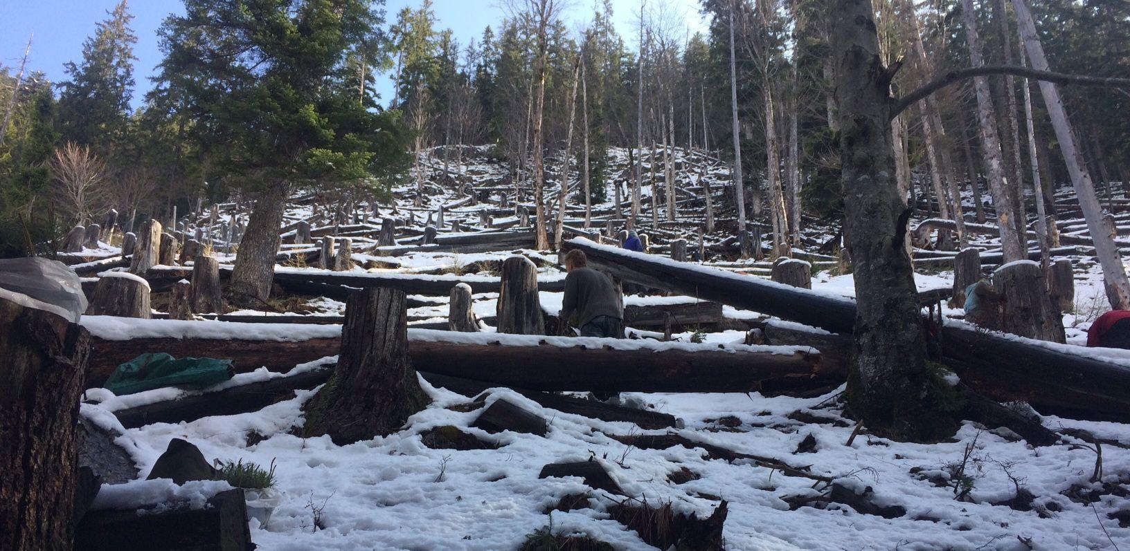 Neuschnee, Nochschnee und Baldwiederwegschnee