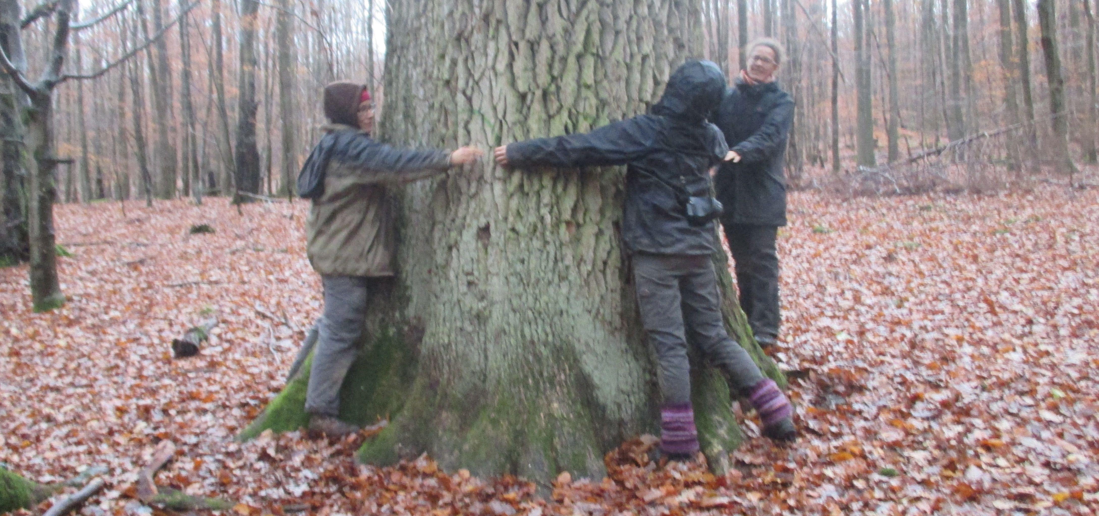 Drei Menschen umarmen eine Spessarteiche