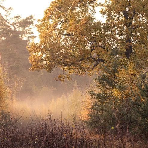 gunzesried_landschaft.jpg