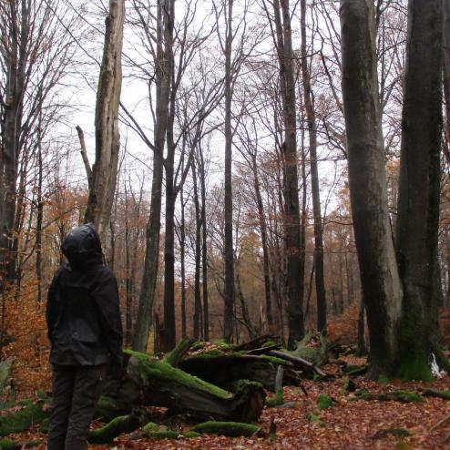 Im Spessart gehen Blick und Bäume gen Himmel