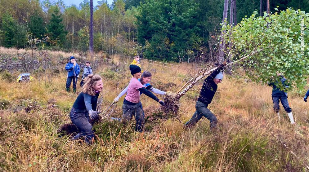 Sogenannter Baum-Rausbuddel-Wettbewerb