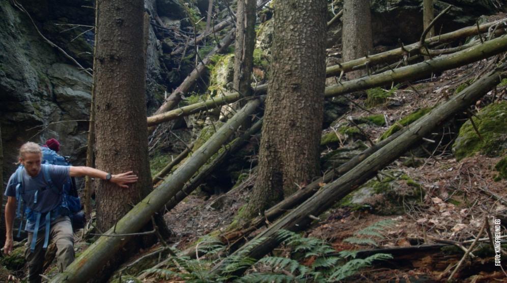 Der wilde Wald auf der Leinwand