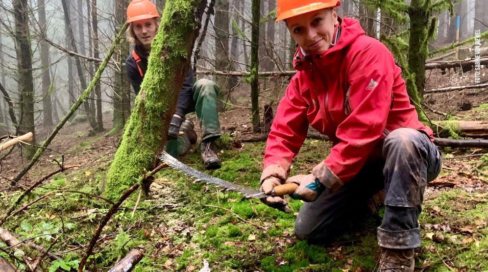 Neuer Wald braucht Lücken im Altbestand