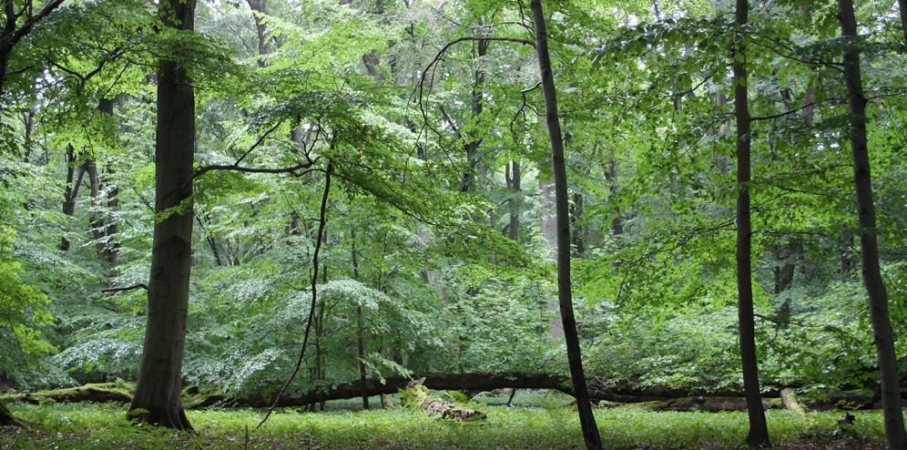 Nationalpark Hainich2