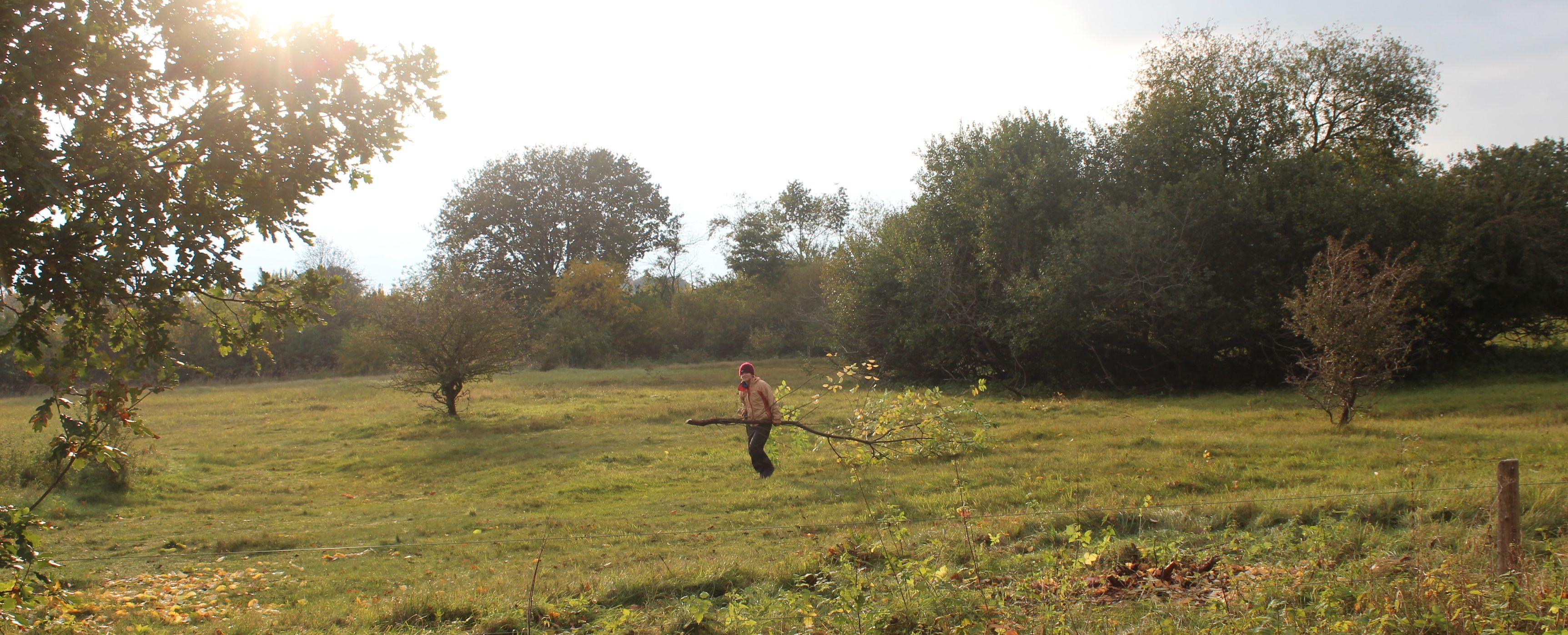Freiwillige freiwillig eine Traubenkirsche hinter sich herziehend.