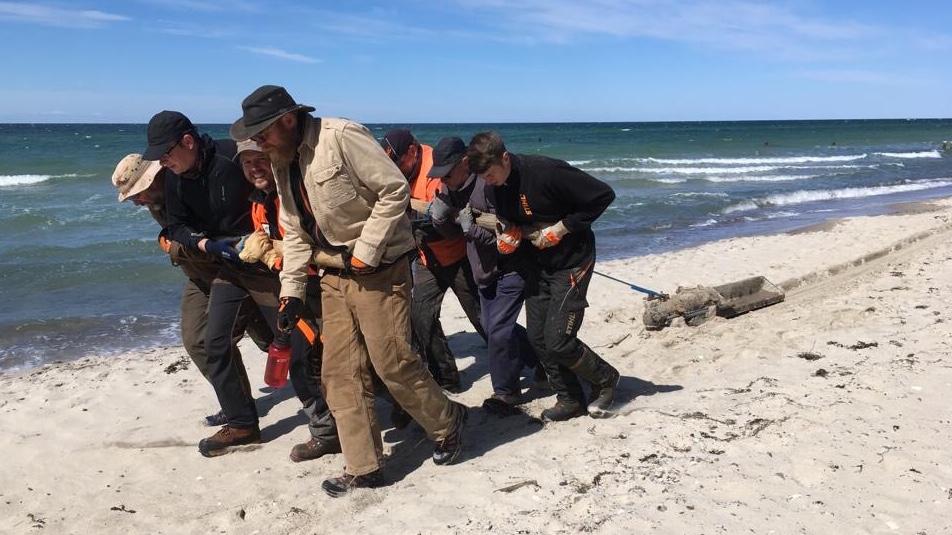 Die Quasi-Treidler vom Ostseestrand