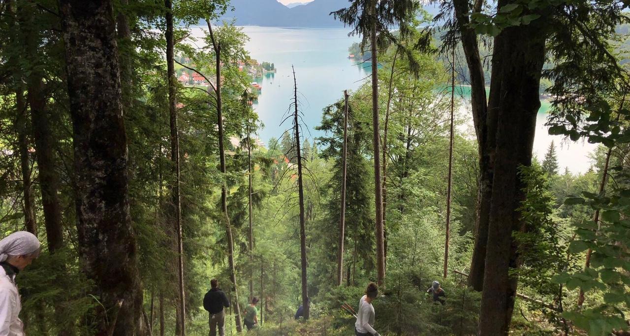 Durchblick runter zum Walchenseespiegel